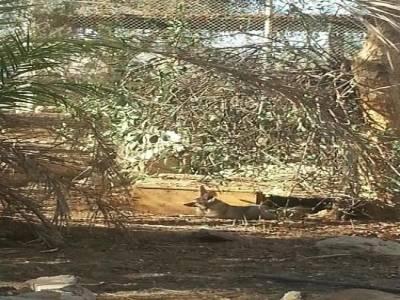Заповедник дикой природы Хай Бар|escape