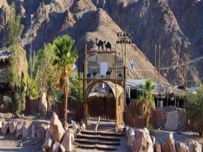 Экскурсия на верблюдах и дегустация сыров|escape