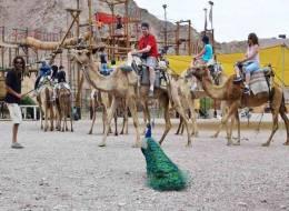 Экскурсия на верблюдах и дегустация сыров-253