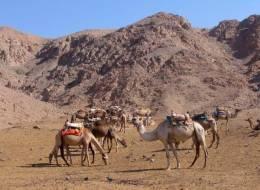 Экскурсия на верблюдах и дегустация сыров-254