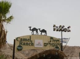 Экскурсия на верблюдах и дегустация сыров-255