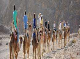 Экскурсия на верблюдах и дегустация сыров-256