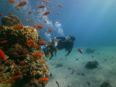 Ознакомительное ныряние с аквалангом в Красном море|escape